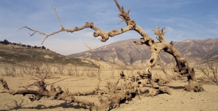 Cómo nos está afectando el Cambio Climático en España