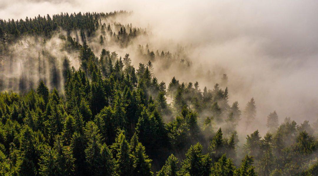 Proyecto Life Nieblas